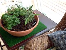 From-left-lemon-balm-French-thyme-and-sag