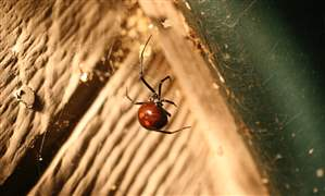 Gardening-Beneficial-Spiders